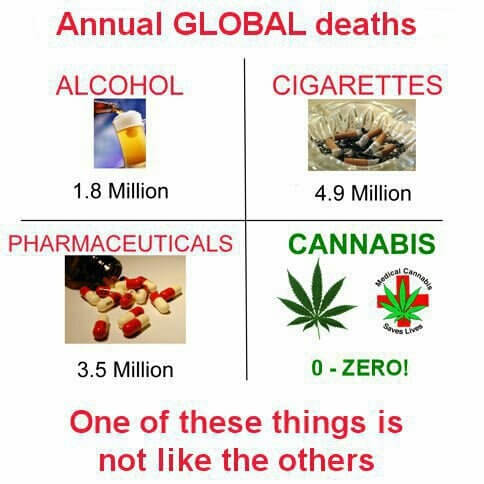 Opioid addiction kills, cannabis doesn't.