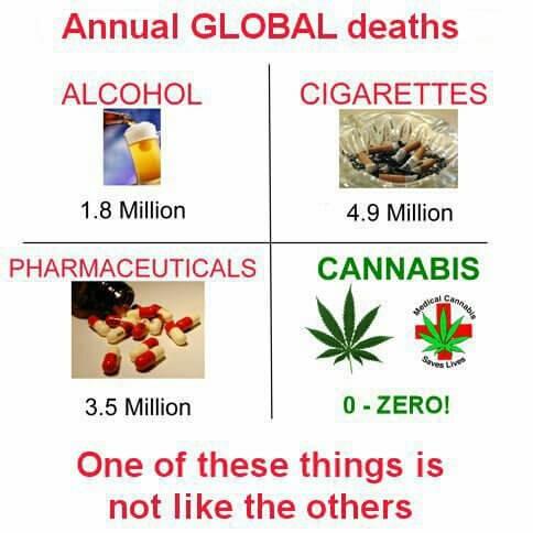 Opioid addiction kills, cannabis doesn't.