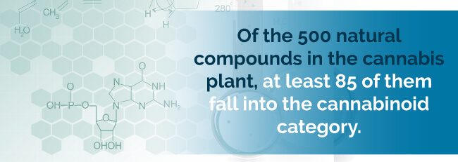 Of the 500 natural compounds in the cannabis plant, at least 85 of them fall into the cannabinoid category