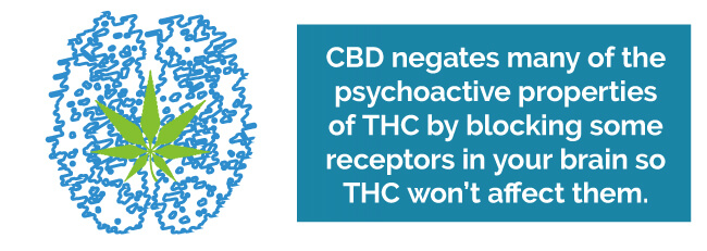 CBD negates many of the psychoactive properties of THC by blocking some receptors in your brain so THC won't affect them