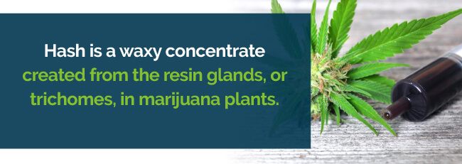 Hash is created from the resin glands in marijuana plants