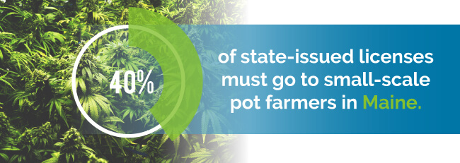 40$ of state-issued licenses must go to small-scale pot farmers in Maine