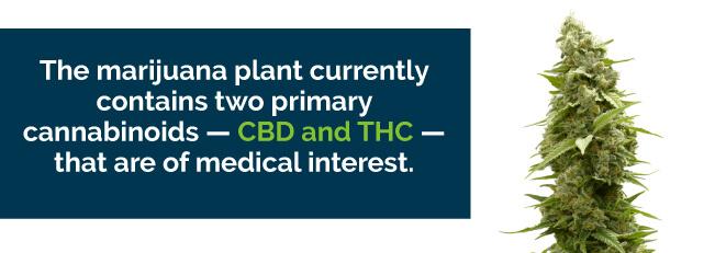 marijuana cbd thc