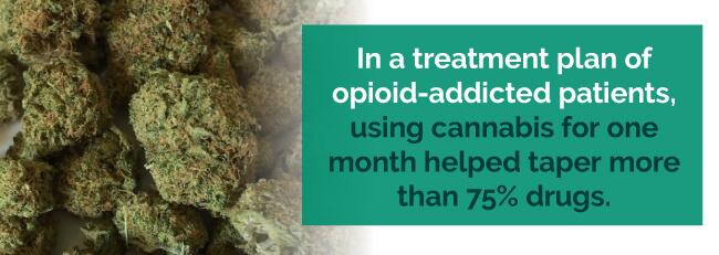 marijuana opioid addiction