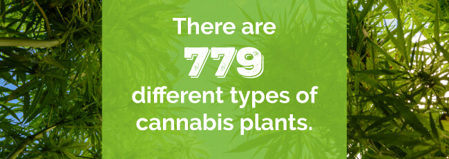 There are 779 different types of cannabis plants