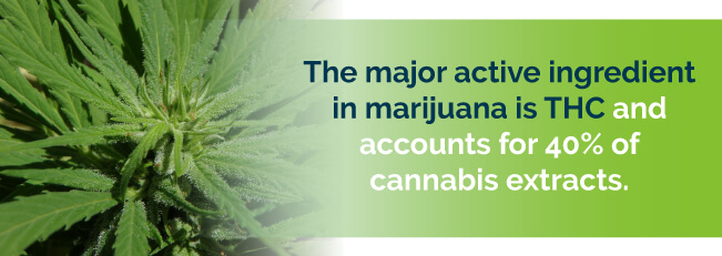 The major active ingredient in marijuana is THC and accounts for 40% of cannabis extracts