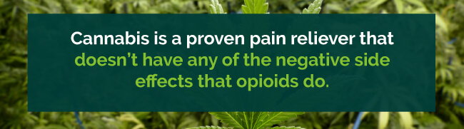 marijuana vs opioids