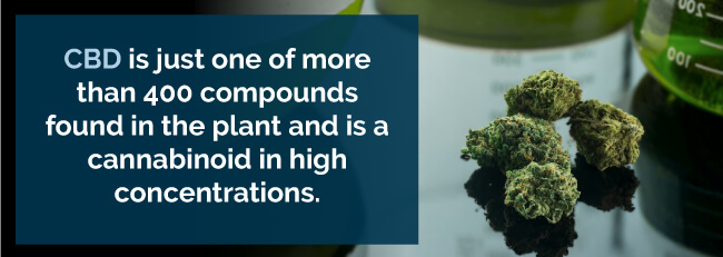 CBD is just one of more than 400 compounds found in the plant and is a cannabinoid in high concentrations