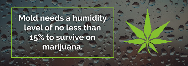 Mold needs a humidity level of no less than 15% to survive on marijuana