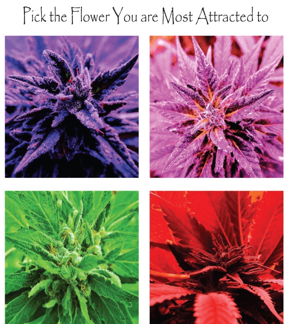 Color Attraction- pick the flower - CE Core 4
