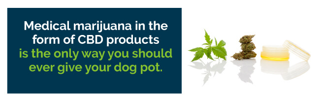 pot for dogs