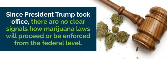 president trump marijuana