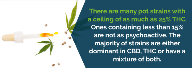 Most strains are dominate in CBD, THC or a mixture of both