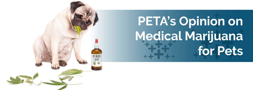 PETA Opinion on Medical Marijuana for Pets
