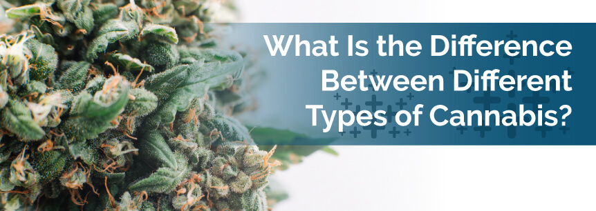 What is the Difference Between Different Types of Cannabis?