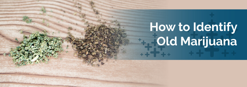 How to Identify Old Marijuana