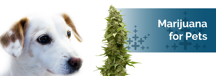 Medical Marijuana for Pets