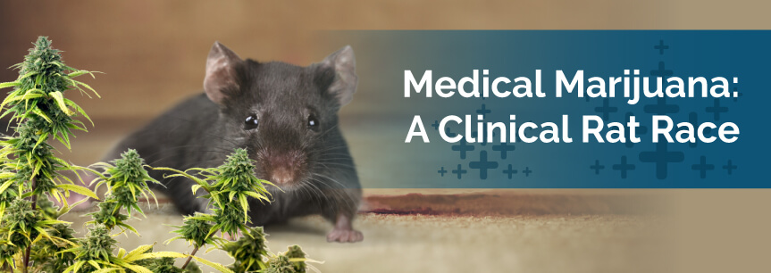 Medical Marijuana: A Clinical Rat Race