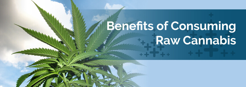 Benefits of Consuming Raw Cannabis