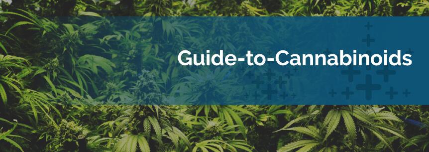 marijuana cannabinoids