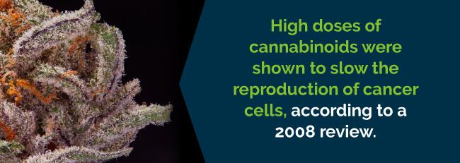 marijuana slows cancer