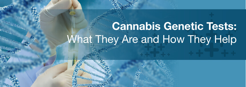 cannabis genetic tests