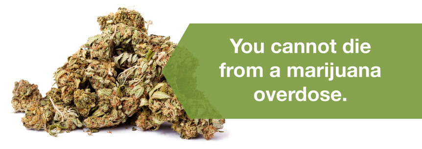cannot die from marijuana