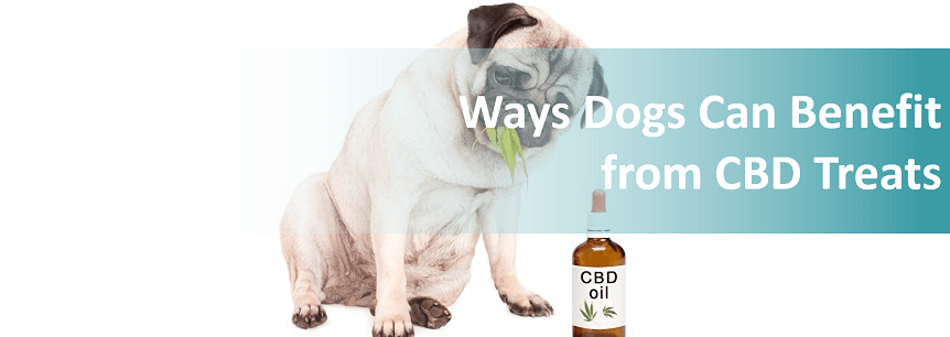 7 Ways Dogs Can Benefit from CBD Treats