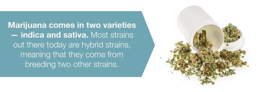 marijuana varieties