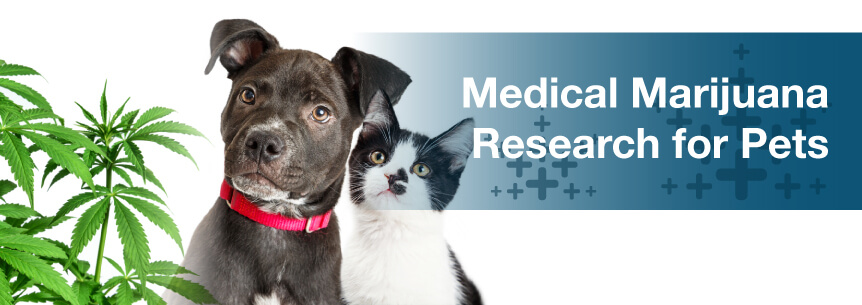 Medical Marijuana Research for Pets
