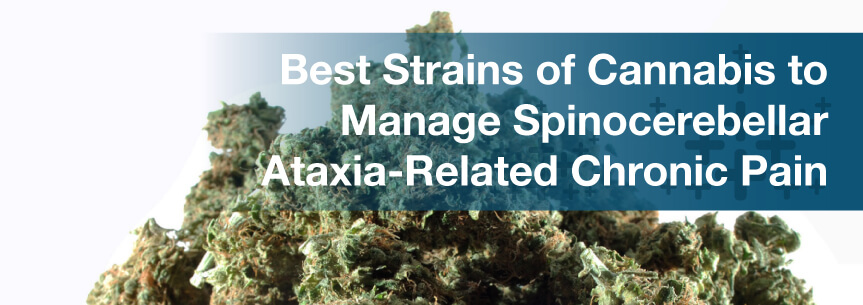 Best Strains of Cannabis to Manage Spinocerebellar Ataxia-Related Chronic Pain