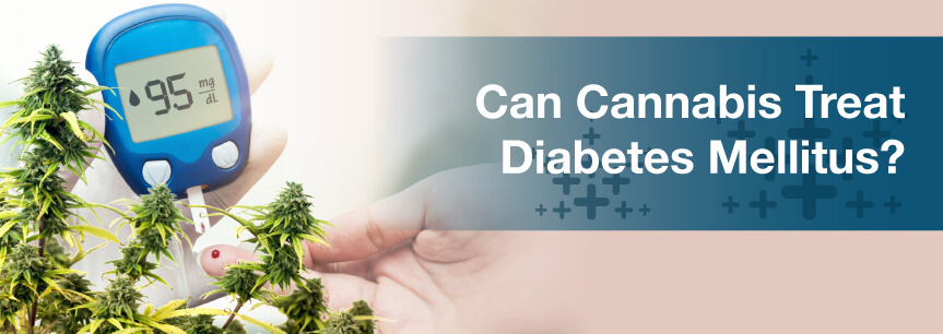Can Cannabis Treat Diabetes Mellitus?