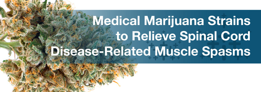 Medical Marijuana Strains to Relieve Spinal Cord Disease-Related Muscle Spasms