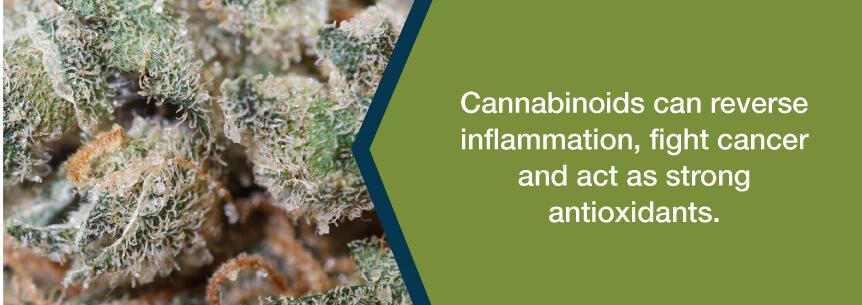 cannabinoid help