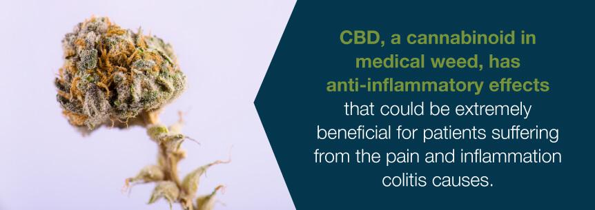 cbd for colitis