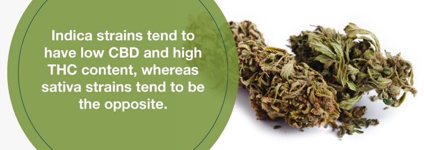 sativa and indica strains