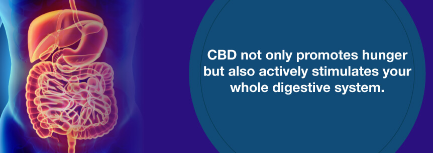 cbd and digestive system