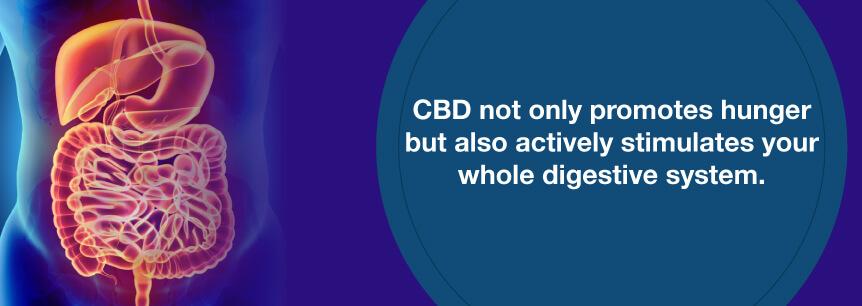 cbd and digestive system