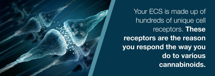 ecs receptors