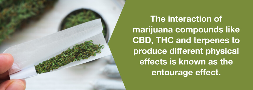 marijuana entourage effect