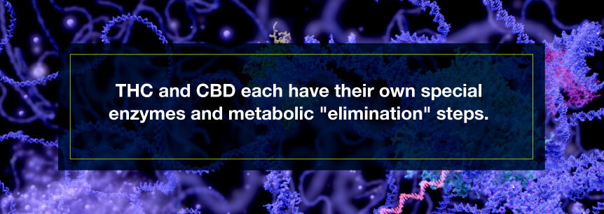 thc cbd enzymes