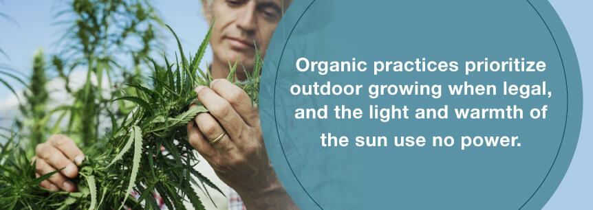 grow organic marijuana