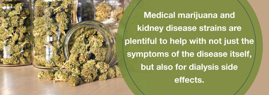 kidney cannabis help