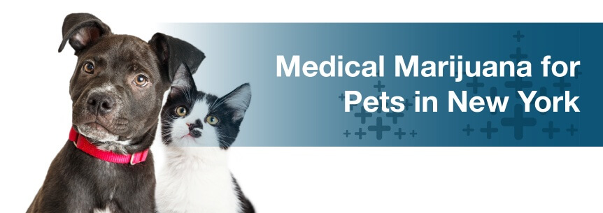 Medical Marijuana for Pets in New York