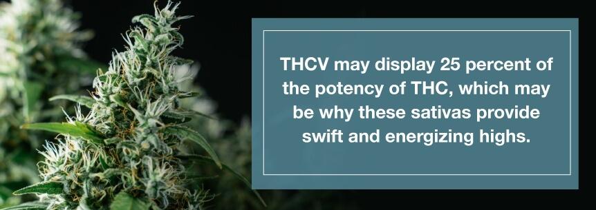 thcv strains