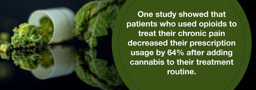 opioids and marijuana