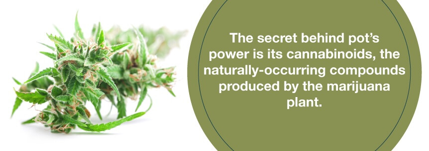 CBD in the treatment of thyroid gland ...