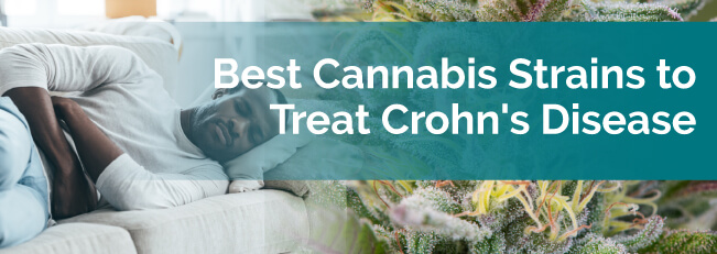 Best Cannabis Strains to Treat Crohn's Disease