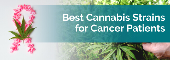 Best Cannabidiol Strains for Cancer Patients