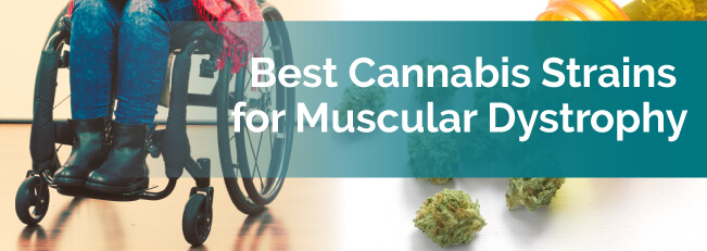 Best Cannabis Strains for Muscular Dystrophy